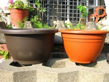 葡萄矮盆&橡木桶
